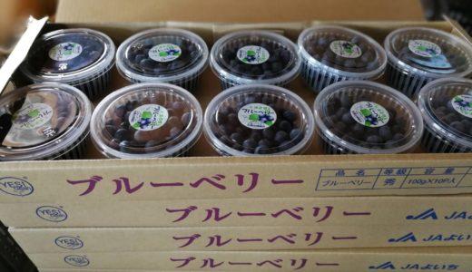ブルーベリー収穫、出荷中!北海道余市からの直送販売も‼