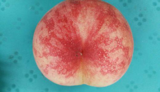 初物の桃『夢富士』収穫開始!販売のおしらせと、ももの美味しい食べ方や保存方法をご紹介