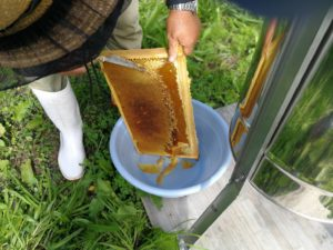 ハチミツ 採蜜