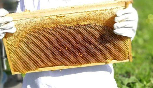 今シーズン最後の天然ハチミツ『百花』コクのある甘みになりました。