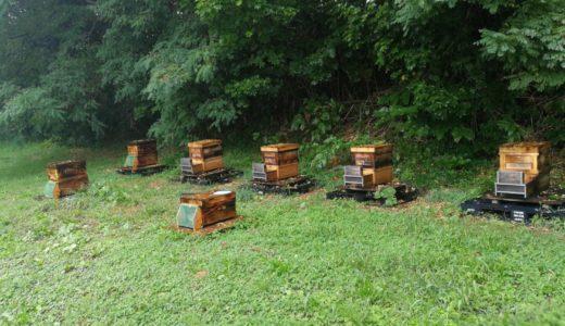 雨にも負けずに懸命に食料を運ぶミツバチに秋を越して迫りくる冬を感じた。