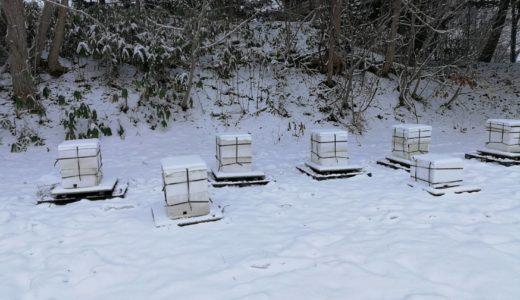当園のミツバチ達も越冬状態に!しかし北海道の冬はあまりにも厳しい…