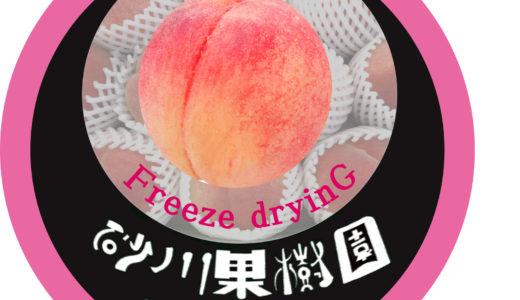 北海道余市産!桃とプルーンのフリーズドライ販売中!