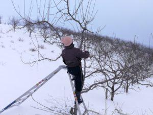 冬の剪定作業