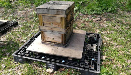 北海道の厳しい冬を乗り越えて、ミツバチが元気よく飛び出した