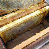 養蜂箱と巣楚