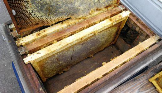 春を迎えられなかったミツバチの巣箱を掃除
