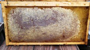 巣礎の貯蜜