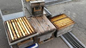 ミツバチの巣箱