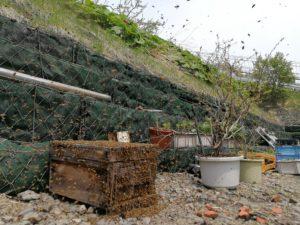 ミツバチの大群