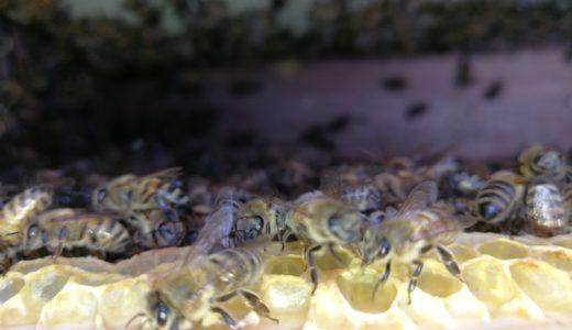 晴天の空にミツバチの大群が!?