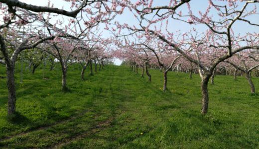 北海道余市、砂川果樹園の園地情報をお届けします。