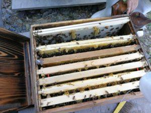 ミツバチの状況