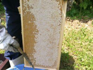 ハチミツがたっぷり入った巣枠