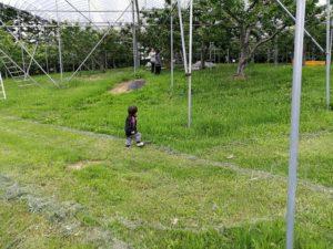 園地を歩く男の子