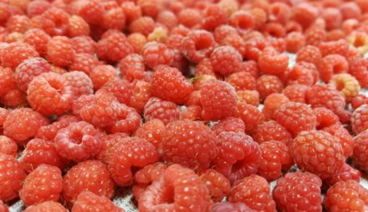 余市産のラズベリー【よいち木いちご】の収穫につき、2018年度の冷凍ラズベリー販売開始!