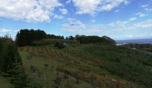 北海道も秋の色合い、蜜蜂の越冬準備も始まっています。