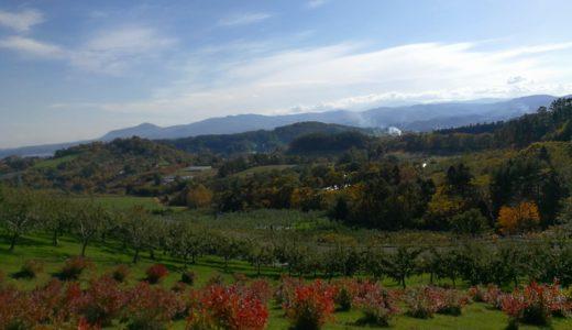 迫る冬を前に、徐々に冬支度をする園地では!余市産ラズベリー、栗も収穫中です。