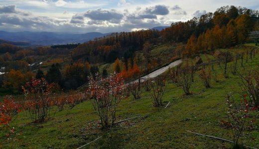 11月も半ばにして小果樹の支柱杭打ち作業中、やばい雪降る‥