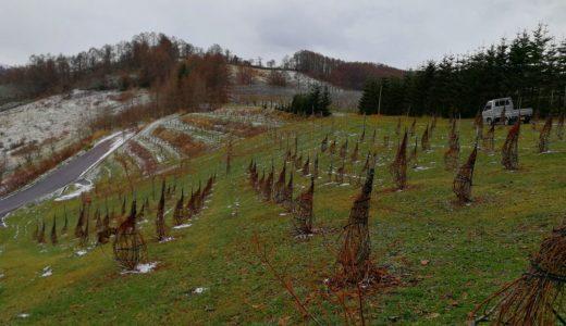 園地の冬支度も終わり…来年度に向けての準備が始まる
