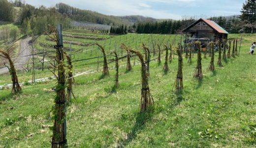 北海道余市に来たら、余市ワイナリー葡萄酒醸造所にご家族で