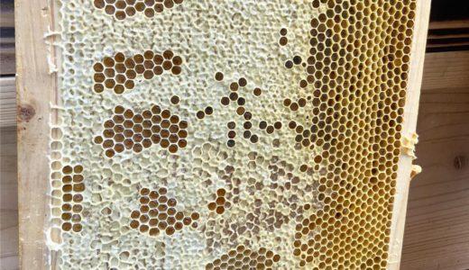 北海道余市の果樹園と生きるミツバチの恵、天然はちみつ