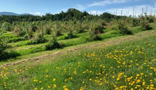 北海道余市の果樹農家、天空の砂川からの果物情報