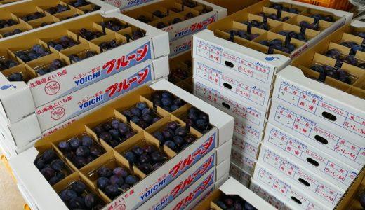 9月も後半、余市砂川果樹園!最新の果物情報